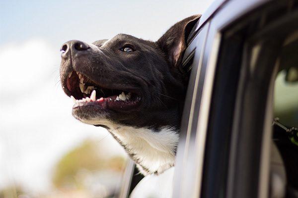 Animaux domestiques et transports, que dit la loi et comment adopter les bons réflexes ?
