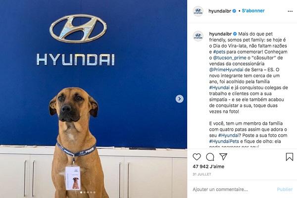Hyundai Brésil : un chien employé dans une concession